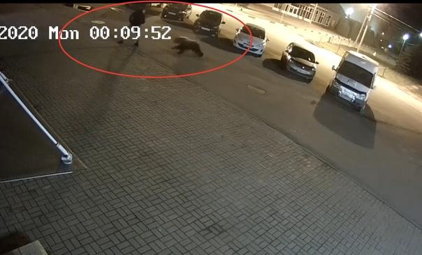 В Ярославле медведь напал на прохожего. ВИДЕО инцидента
